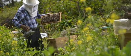 Beekeeping in Apurímac, Peru