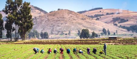 Farmers in the Andes. Credit: Christian Vinces - Shutterstock.com